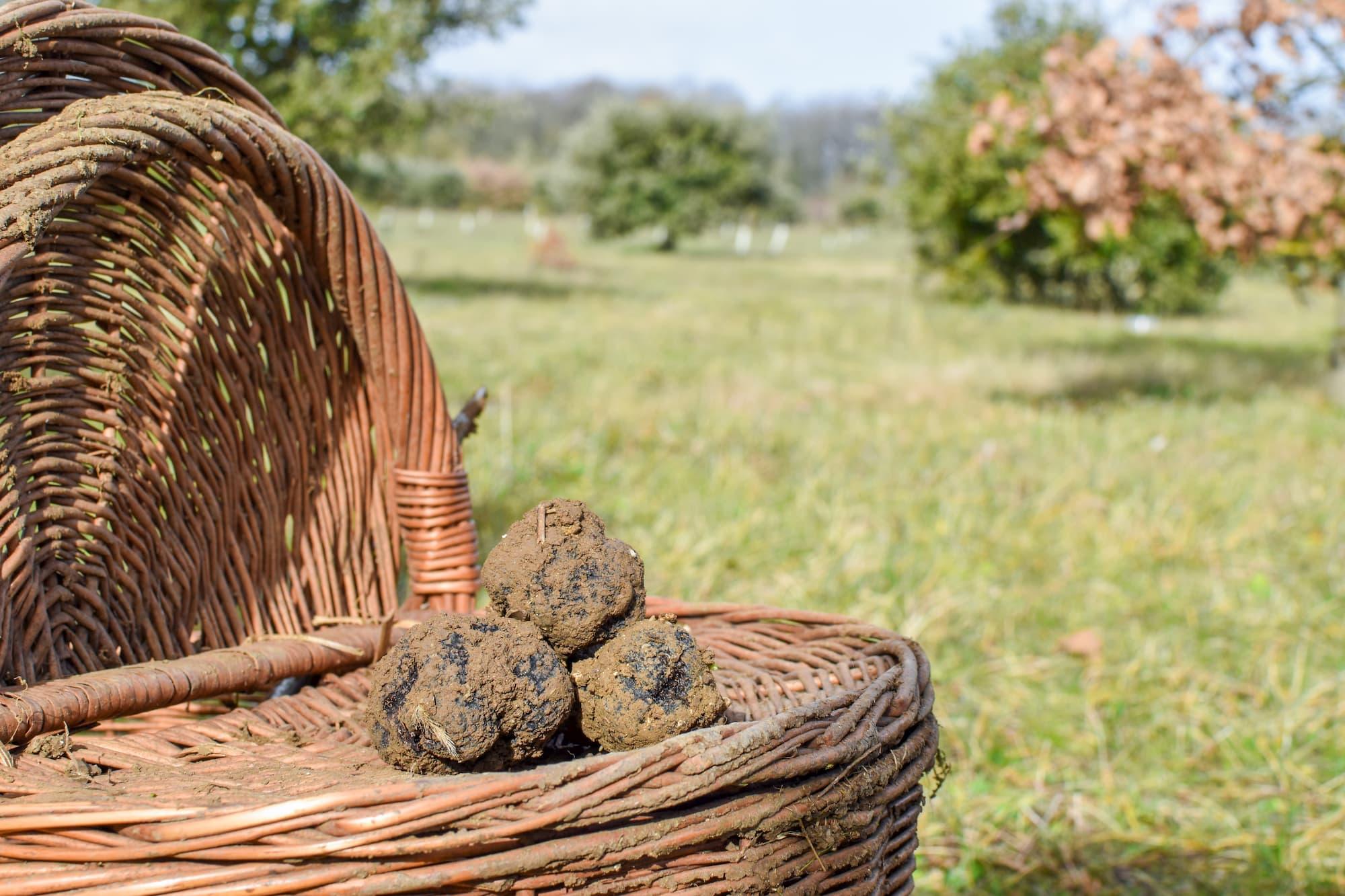 Un panier avec quelques truffes
