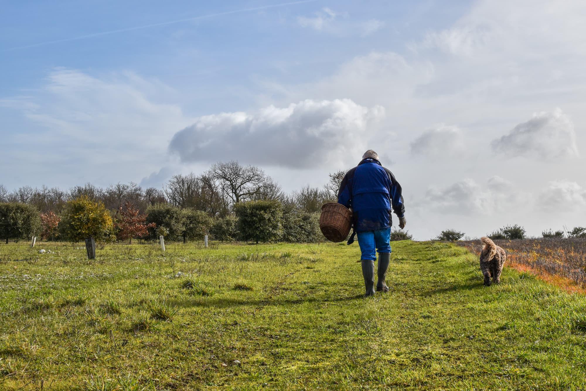 Un Lagotto et son maître sur une exploitation agricole