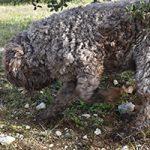Formation : Dressage du chien, cavage