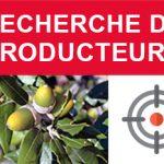 Recherche de Trufficulteurs qui utilisent des chênes verts