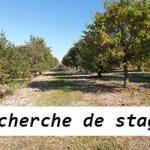 Recherche de stage en exploitation Agricole (trufficulture)